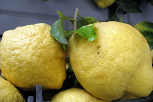 Lemons in Sorrento, Italy