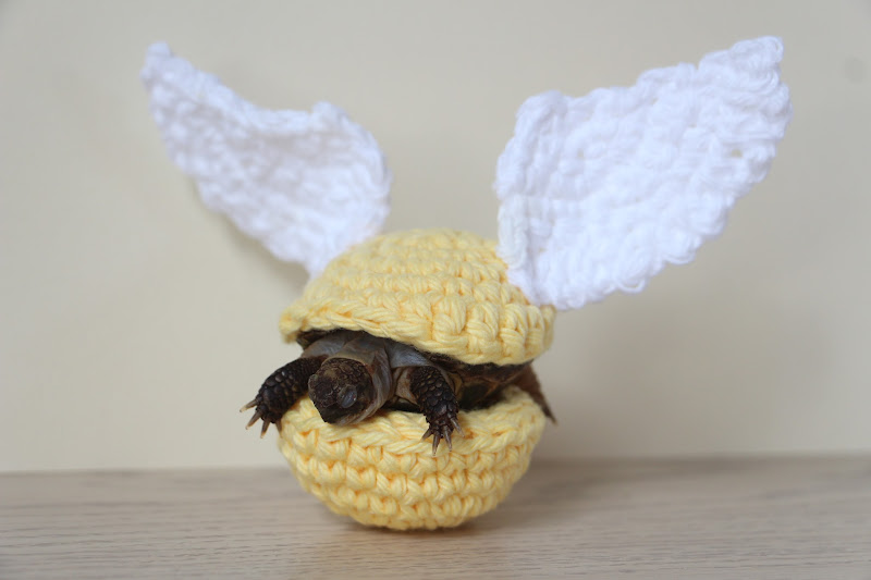 Golden Tortoise Snitch The Whimsy Turtle