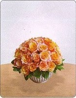 Mawar Cantik Dan indah