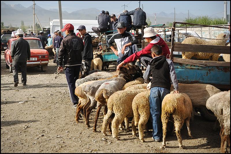 Kirghizstan : des steppes aux Monts Célestes [MAJ 16/09] DSC_9627%2520raw-794%252Bcadre