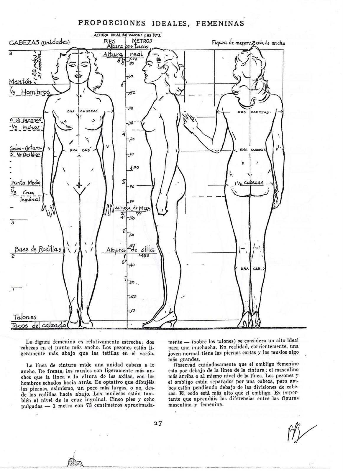 Dibujo artistico ii proporciones ideales del cuerpo humano for Medidas antropometricas del cuerpo humano