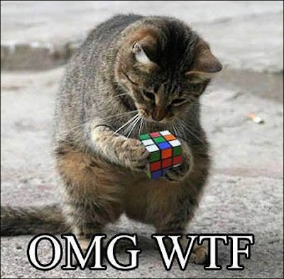 Intelligent cat plays with Rubik's Cube