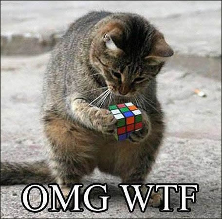 Inteligent cat plays with Rubik's Cube