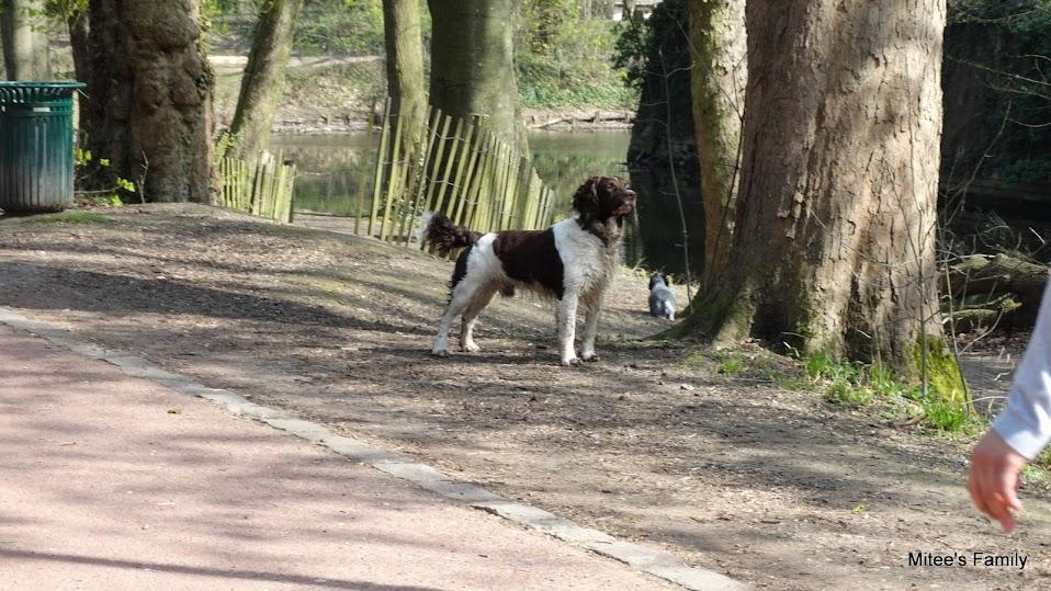 Balades canines en Nord (59)/Pas de Calais (62) - Boulogne-sur-Mer, Calais et Lille - Page 4 DSC01870