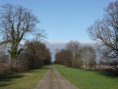 Lime Avenue, the 300 year old avenue that leads from Friston Hall to Snape Common