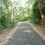 Trail going uphill in Blackbutt Reserve (399559)