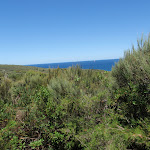 Ocean glimpse through the taller heath on Geebung Track (249910)