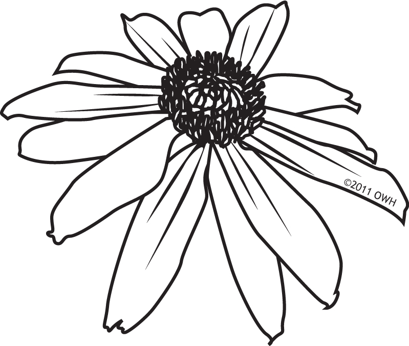 Line Drawing Coneflower : State digis operationwritehome