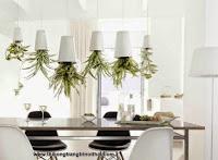 """Trồng cây treo ngược: ý tưởng """"tô màu"""" xanh cho nhà phố chật - Thi công trang trí nội thất"""