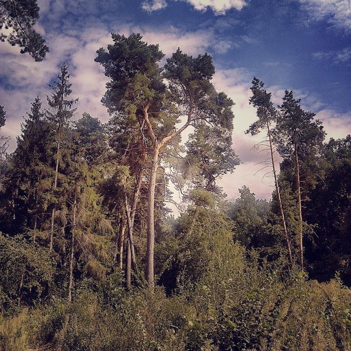 Деревья и небо сняты и обработаны на телефоне