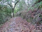 Ramage Peak Trail through a forest.