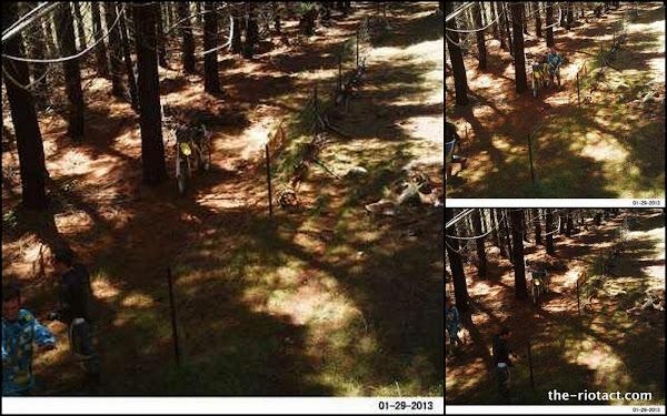 kowen forest