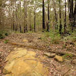 Rocky track in the Watagans (320972)