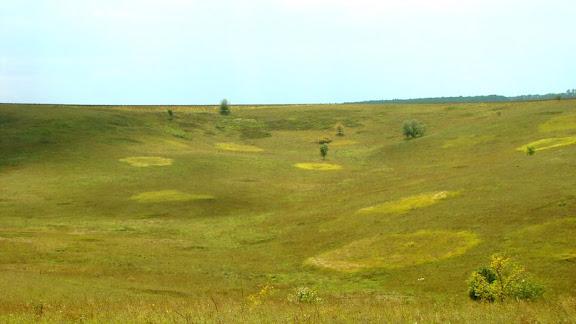поле круги