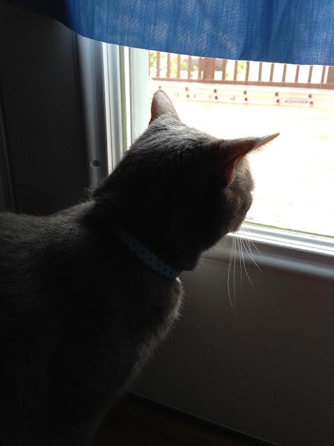 patrol cat
