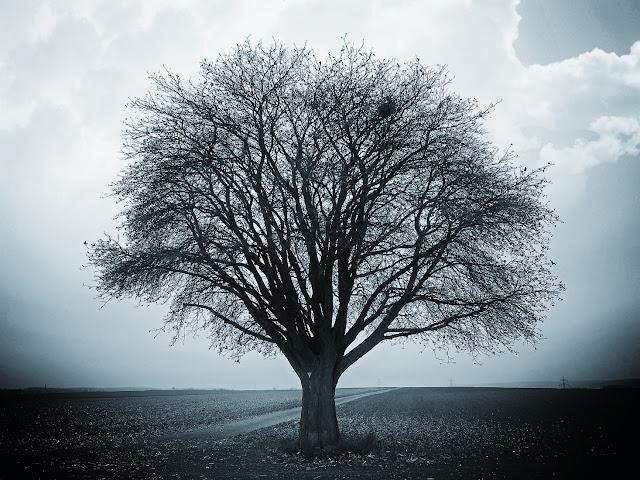 leafless tree german countryside