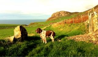 Dog Walks Llyn Peninsula