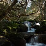 Creek beside Birralee Bushcamp (275201)