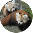 Glitter Panda Avatar