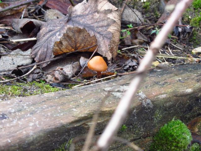 mushroom by the steps