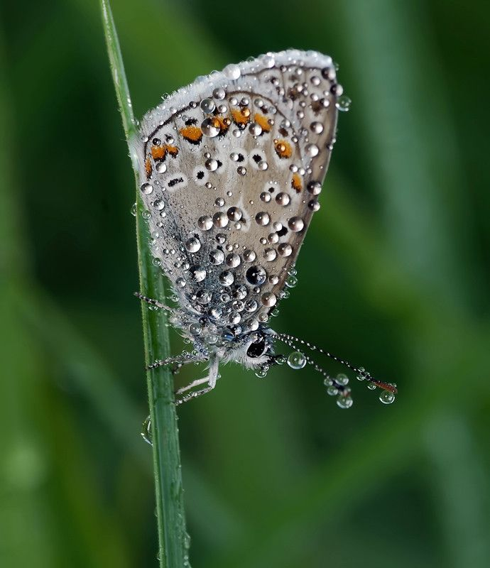 Butterfly in 50 Howling Examples of Dew Photography