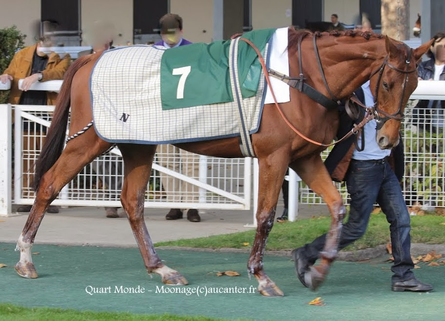Photos Auteuil 2-11-2014 (48h de l'obstacle) IMG_5570
