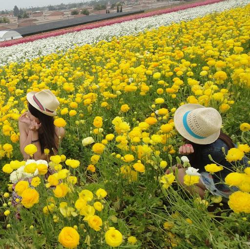 Elain Chen Photo 12