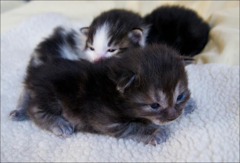 двухнедельные котята фото разноцветные пёрышки