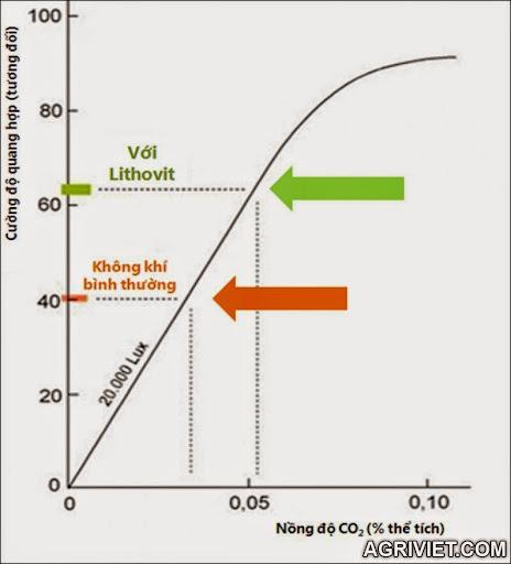 Agriviet.Com-c%25C6%25B0%25E1%25BB%259Dng_%25C4%2591%25E1%25BB%2599_h%25C3%25B4_h%25E1%25BA%25A5p.jpg