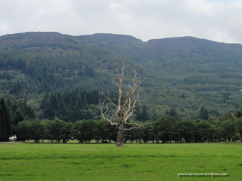 - Passeando até à Escócia! - Página 15 DSC03310
