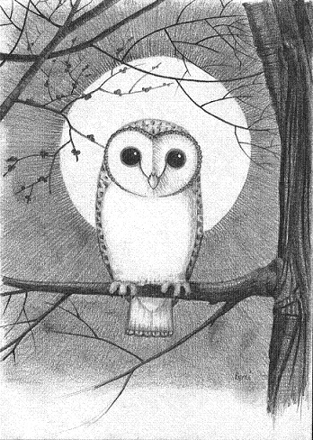 how to draw an owl for beginners