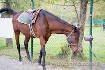 gölet etrafında tur atabildiğiniz at, Cansu Alabalık Maşukiye