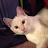 Amy Vasbinder avatar image