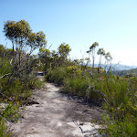 Rock platform south of Dillans Track (379916)