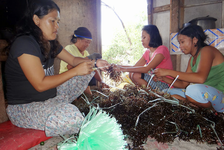 Photo of women farmers choosing seaweeds.