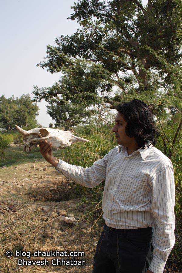 Bhangarh - Skull Held
