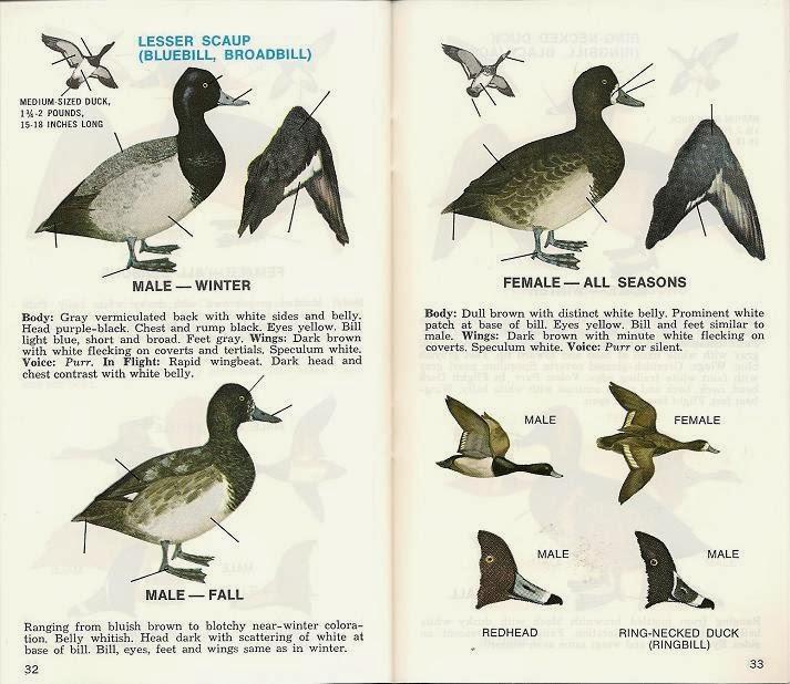 Avian Review