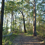 Tall open forest on the ridge in Palm Grove NR (369940)