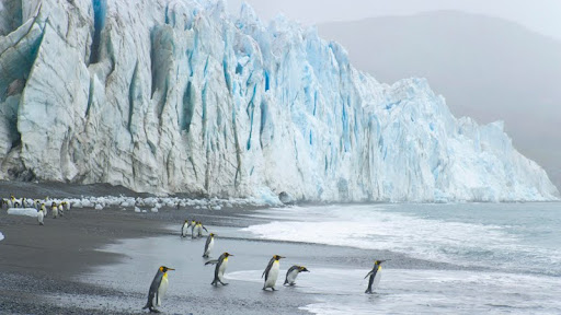 King Penguins at the Foot of Fortuna Glacier, Cumberland Sound, South Georgia Island.jpg