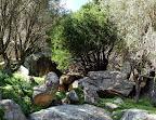 Παλιά πεζούλια κι ελιές ανάμεσα στους βράχους