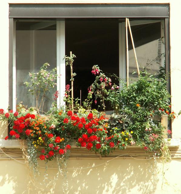 Jardinières en pallette avec mur végétal incorporé PICT0128