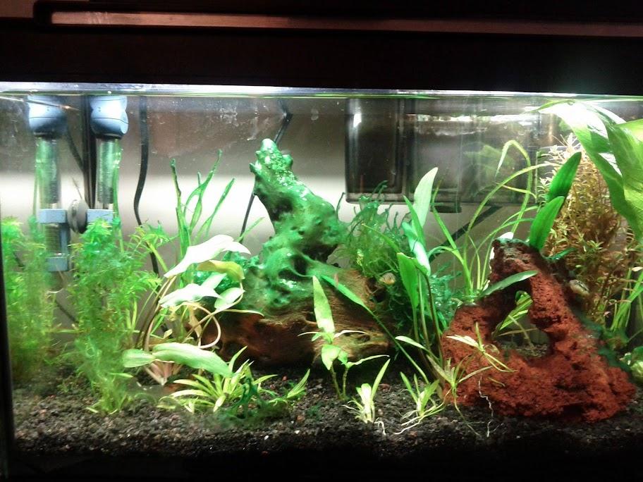 how to get rid of bluegreengreenblue algae