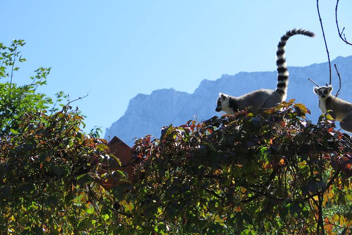 Die Kletterkünstler genießen den Bergblick