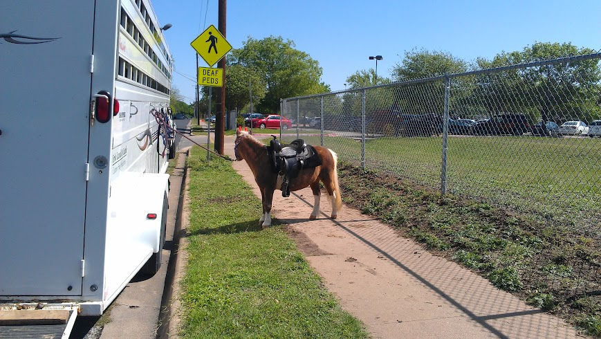 Horses in the schoolyard, part 1