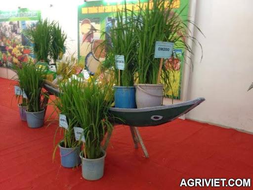 Agriviet.Com-578112_160435287500121_1629889737_n.jpg