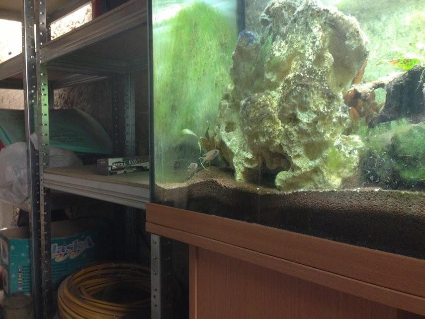 Ma petit histoire Aquariophile de 2009 à aujourd'hui  Aquarium+026