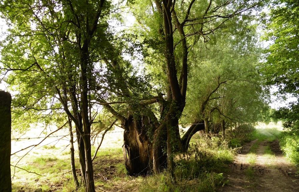 veldweg tussen Templeuve en Blandain