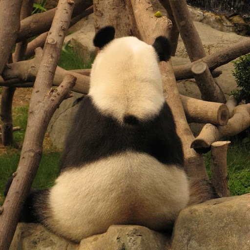 Hung Wong Photo 32