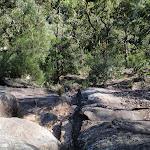 Looking down climb between Pisgah Rock and Erskine Creek (143991)