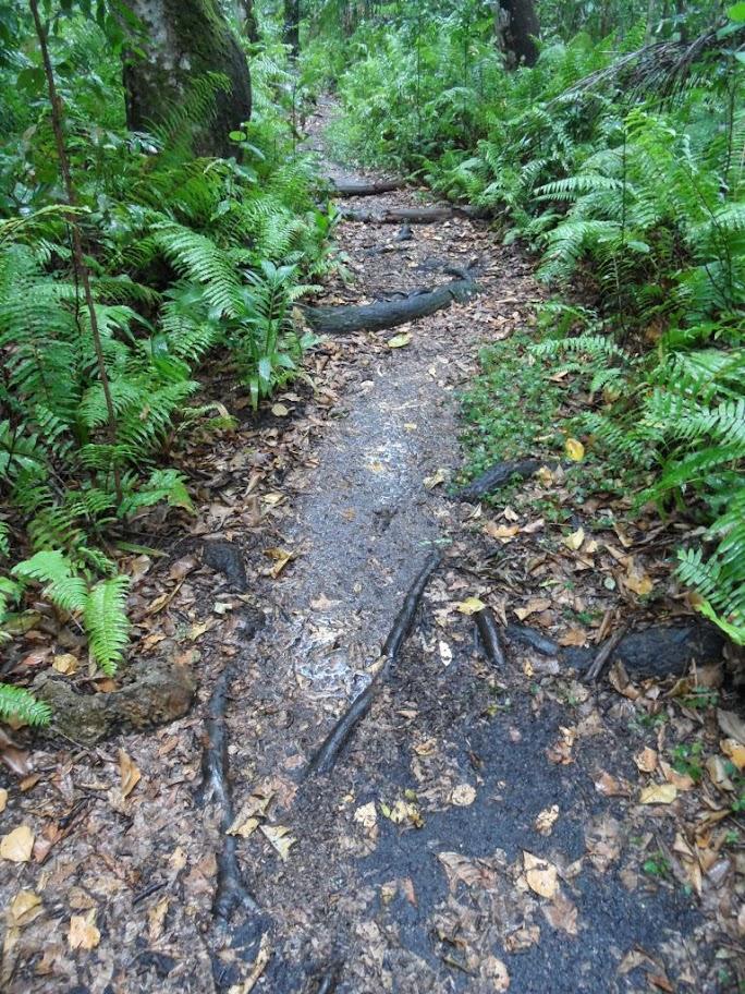 Yağmurlu Jozani Ormanı